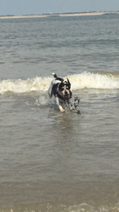 monty the dog in te sea