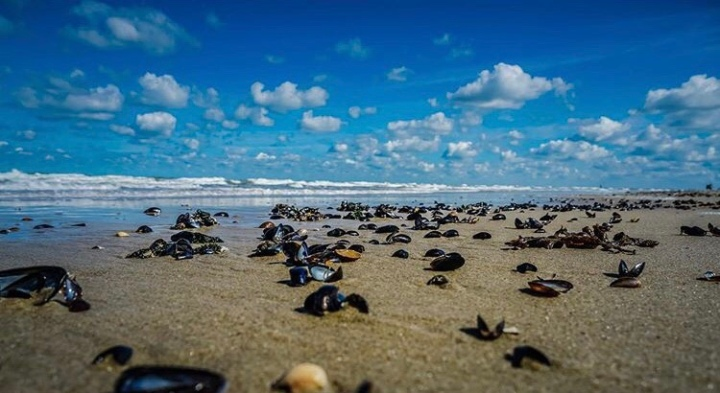Strandvondsten
